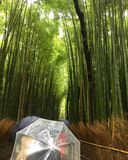 Rainy day in Kyoto. Bamboo forest of arashiyama Stock Photography