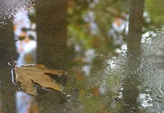 Rainy Day Leaf In Puddle royalty free stock photo
