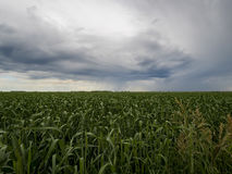 Rainy Day over the wheat fields. Rain clouds and vivid skies over the wheat fields Royalty Free Stock Images