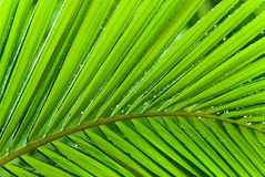 Rainy Day Palm Fronds Royalty Free Stock Image