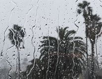 Rainy Day and Palm Trees stock photos