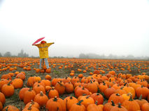 Rainy Day Pumpkin Patch Scarecrow stock photos