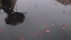 Rainy day stock video