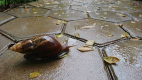 Rainy day with Snail royalty free stock photos