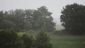 Rainy day. Strong wind and rain. Trees and plants. Nature landscape. Slow motion. Stormic weather. Nature landscape. Forest and trees. Strong wing and rain. Slow stock video footage