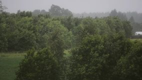 Rainy day. Strong wind and rain. Trees and plants. Nature landscape. Slow motion. Stormic weather. Nature landscape. Forest and trees. Strong wing and rain. Slow stock footage