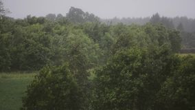 Rainy day. Strong wind and rain. Trees and plants. Nature landscape. Stormic weather. Nature landscape. Forest and trees. Strong wing and rain stock video footage