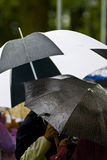 Rainy day umbrellas. Diverse umbrellas held by people on the street on a rainy day Royalty Free Stock Photography