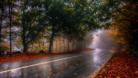 On a rainy day. Wet forest road on a rainy autumn day Stock Photo