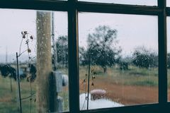 Rainy Day window flower cloudy indoor Royalty Free Stock Image