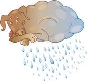 Rainy dog Stock Image