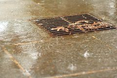 Rainy drain. A wintry shower and debris by a drain grate Royalty Free Stock Photos