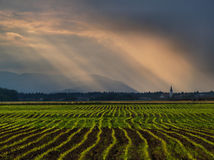 Rainy Field Stock Photography