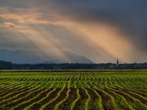 Rainy field Stock Photography