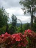 Rainy Flowery Days Stock Photo
