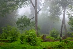 Rainy Summertime in the Woods Stock Images