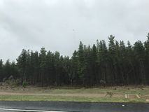 Rainy Forest Drive. A drive past an Australian forest on a rainy day Stock Photo