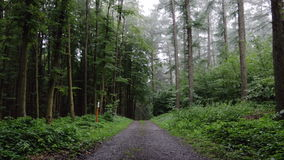 Rainy Forest Path. A shot of a forest with a path. The foliage is wet from recent rainfall stock video footage