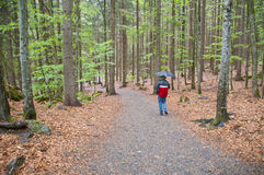 Rainy forest walk. Walk through a part of the national park bavarian forest on a very rainy day. Together with the Bohemian Forest the Bavarian Forest forms the Royalty Free Stock Photo