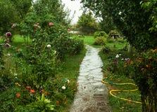 Rainy garden Stock Images