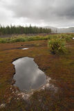 Rainy grassland landscape with a puddle Royalty Free Stock Photo
