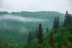Rainy green mountain landscape. Horizontal rainy green mountain landscape Royalty Free Stock Image