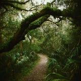 Rainy Hike. Early Morning rainy hike along the Atlantic ocean near Jacksonville Florida royalty free stock images