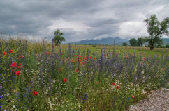 Rainy landscape. Rainy lowering sky and the field of bright wild flowers with mountains in a background. Bosnia and Herzegovina Stock Photos