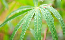 Rainy leaf Stock Image