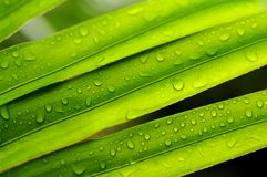 Rainy leaf Royalty Free Stock Images