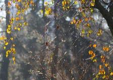 Rainy leafs Royalty Free Stock Photography