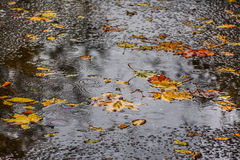 Rainy mood. On a gloomy autumn rainy day royalty free stock images