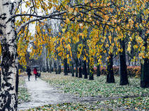 Rainy morning in the park. Stock Image