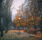 Rainy morning in the park. Royalty Free Stock Images