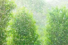 Rainy outside window green background texture. Royalty Free Stock Images