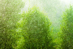 Rainy outside window green background texture. Summer rainy outside window, water drops droplets raindrops on glass windowpane as background texture. Downpour stock image