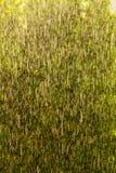 Rainy outside window green background texture. Stock Photos