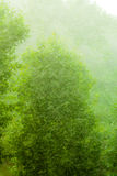 Rainy outside window green background texture. Royalty Free Stock Image
