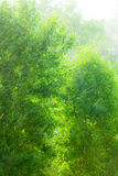 Rainy outside window green background texture. Stock Images
