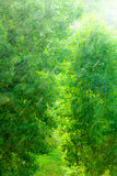 Rainy outside window green background texture. Royalty Free Stock Photography