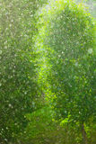 Rainy outside window green background texture. Summer rainy outside window, water drops droplets raindrops on glass windowpane as background texture. Downpour Royalty Free Stock Photo