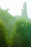Rainy outside window green background texture. Royalty Free Stock Photo