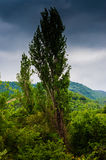 Rainy Pastoral Landscape Daytime Stock Photo