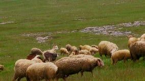 Rainy Pasture stock video