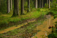 Rainy path Royalty Free Stock Image