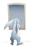 Rainy rabbit. Rabbit by the window in rainy weather Stock Images