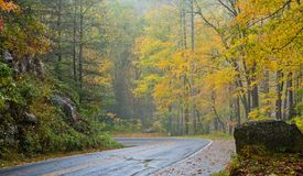 Rainy road in the fall. Rainy road landscape in autumn or fall Royalty Free Stock Images
