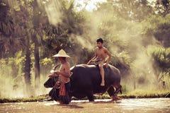 Rainy season farming Stock Images