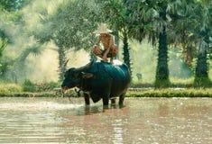 Rainy season farming Stock Photos