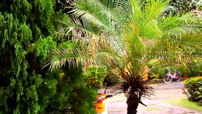Rainy season in the tropical region. Palm tree In. The wind stock video footage